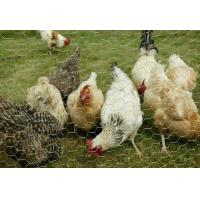 Wholesale  Chicken Mesh Wire Netting Supplier from china suppliers
