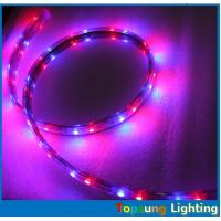 Wholesale Hot sale 5050 smd 60LED/m blue strip flexible led ribbon 110V AC LED strip from china suppliers