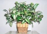 Quality Tabletop Plants for sale
