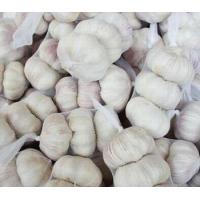 Wholesale Fresh Pure White Garlic 3.5-7.0cm from china suppliers