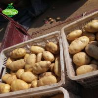 Wholesale Fresh Potato Seller,2018 New Crop from china suppliers