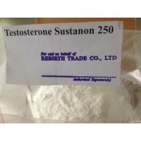 Wholesale White / Off - White Raw Testosterone Sustanon For Burning Body Fat from china suppliers