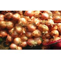 Wholesale Authenticated Non-Peeled Red Asian Shallots Fresh Contains Flavonoids from china suppliers