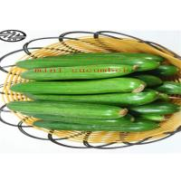 China Healthy Mini Cukes Cucumber Control Blood Pressure And Manage Diabetes on sale