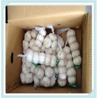 Wholesale 2015 New Shandong Garlic Fresh White normal white Garlic from china suppliers