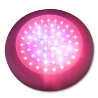 Buy cheap High Efficiency red / blue Epileds LED Plant Growing Lights 50W 300mA 175 * 60mm from wholesalers