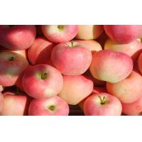 Wholesale bright red skin streaked with yellow Large Fuji Apple sweet tart flesh medium-crisp from china suppliers