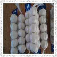 Wholesale 2015 New Crop of Fresh garlic / Normal White / Pure White Garlic from china suppliers