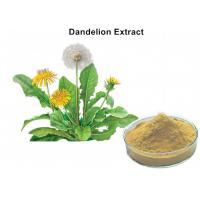 Wholesale 4% Flavonoids Organic Dandelion Root Extract , Dandelion Leaf Extract Anti - Inflammatory And Antiviral from china suppliers