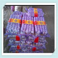 Wholesale 2015 Fresh Garlic Hot sale Normal White and Pure White fresh garlic from china suppliers