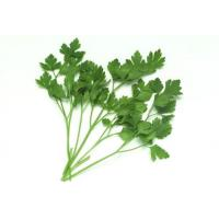 Buy cheap Caraway Extract, Coriandrum sativum Extract, 10:1 TLC, natural Chinese parsley Extract, Chinese exporter from wholesalers