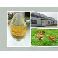 Wholesale Eucommia Ulmoides P.E./ green feed additive from china suppliers