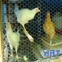 Wholesale Anping Hexagonal Bird Cage Wire Mesh (direct factory) from china suppliers