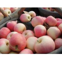 Buy cheap Fresh Organic Gala Apple Delicious Contains Vitamin B6 , C For Children / Kids from wholesalers