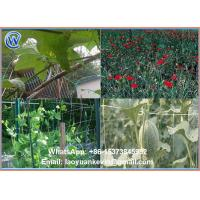 Wholesale 100% new virgin HDPE Green 8gsm 10X10cm plant support net with UV from china suppliers