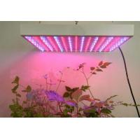 Wholesale IP20 75 CRI 3M/80 AC90-240v 90W LED Plant Growing Lamp With 80% Lumen Maintenance from china suppliers