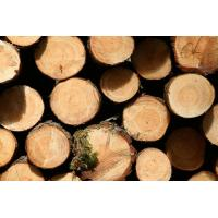Wholesale Global Air, Sea Freight Import the wood China from china suppliers