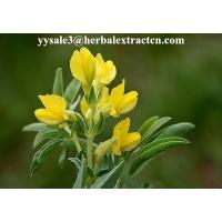 Wholesale DMF Cytisine 98%HPLC,  CAS No.: 485-35-8,White or pale yellow powder, natural ingredient, Shaanxi Yongyuan from china suppliers