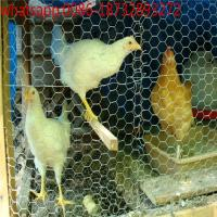 """Wholesale Hexagonal wire mesh, chicken wire mesh, poultry wire 1/2 hex mesh chicken wire/Chicken Poultry Wire Fence 1"""" Hex Mesh from china suppliers"""