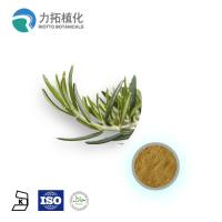 Wholesale 1. GMP Manufacture Rosemary Extract Rosmarinus officinalis from china suppliers