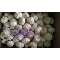 Wholesale Fresh Natural Garlic Best Qualty Competitive Price China from china suppliers