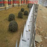 Wholesale Large Size Wall Spike  Fence/Medium Size Wall Spike Anti-climbing Prickly/hot-dipped galvanized fence spikers from china suppliers
