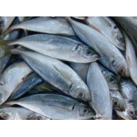 Wholesale Wholesale China frozen seafood fish blue round scad with competitive price. from china suppliers