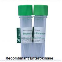 Wholesale Recombinant Enterokinase  E.coli Recombinant Enterokinase Supplier from china suppliers