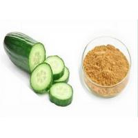 Wholesale Effective Plant Extracts , Odorless Cucumber Extract Powder for Skin Care Product from china suppliers