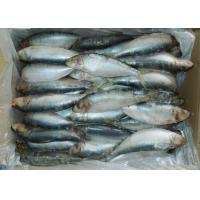 Buy cheap fresh frozen sardine from wholesalers