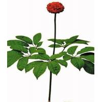 Wholesale plant extract Radix Notoginseng P.E. from china suppliers