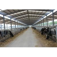 Wholesale Automation And Sanitary Pre-made Steel Structural Cowshed Framing Systems from china suppliers
