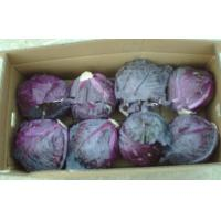 Wholesale Organic Round Purple Fresh Chinese Napa Cabbage Crispy Contains Vitamin-A , Thiamin, Antibacterial anti-inflammatory from china suppliers