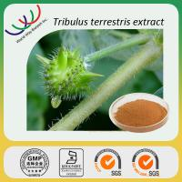 China China manufacturer sales high quality 40% total saponins tribulus terrestris extract on sale