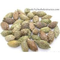 Wholesale Siberian Cocklebur Extract, Xanthium Strumarium Extract, 10:1 TLC, natural pesticide, herbicide, high quality from china suppliers