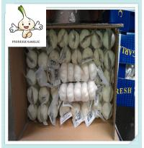 Wholesale Normal White Garlic Fresh Garlic Purple Garlic/Red Garlic/Alho from china suppliers
