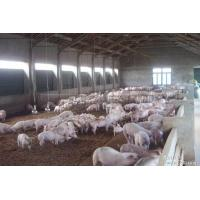 Wholesale H Section Steel Poultry Farm Structure With Galvanized C Purlins from china suppliers