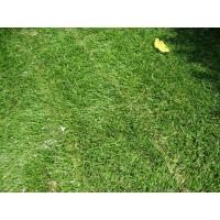 Wholesale Green Landscaping Carpet Artificial Grass , Home Artificial Turf 11600Dtex from china suppliers
