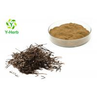 China Spreading Hedyotis Herb Powder/Hedyotis Diffusa/Oldenlandia Diffusa Extract 10:1 on sale