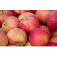 Wholesale Anti-oxidant strength (ORAC value) of 100 g apple fruit with 5900 TE Nutrition Fuji Apple Delicious and crunchy apple fr from china suppliers