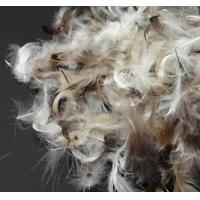 Wholesale Soft Pillow Filling Materials Washed Grey Duck Feathers for Filling Bedding and Clothes from china suppliers