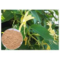 Wholesale Anti Inflammatory Honeysuckle Flower Extract , 5% Chlorogenic Acid Lonicera Japonica Extract from china suppliers