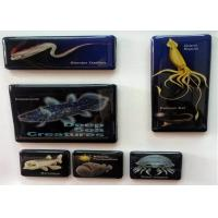 Wholesale Small Animal Rubber Magnets Children / Fridge Photo Magnets With Glue Peritoneum from china suppliers