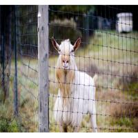 Wholesale goat and sheep fencing from china suppliers