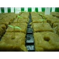 Wholesale Hydroponic Rockwool Grow Cubes  from china suppliers