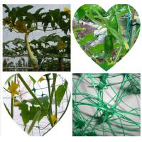Buy cheap Plant Support Net from wholesalers
