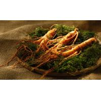 Wholesale Ginseng extract  total saponins of panax ginseng  TSPG from china suppliers