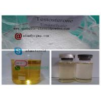 Wholesale Raw Hormone Powders Testosterone Enanthate 250mg / Ml from china suppliers
