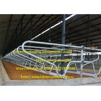 Wholesale Cow Farm Customized Dairy Free Stalls Equipment With Heavy Duty Pipe / Tube from china suppliers
