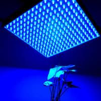 Wholesale IP44 LED Panel Grow Light For Medical Plants / Greenhouse , High Brightness from china suppliers